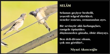 niyazi1