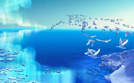 140211__white-birds_p